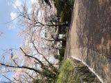 京都市立日吉ヶ丘高等学校