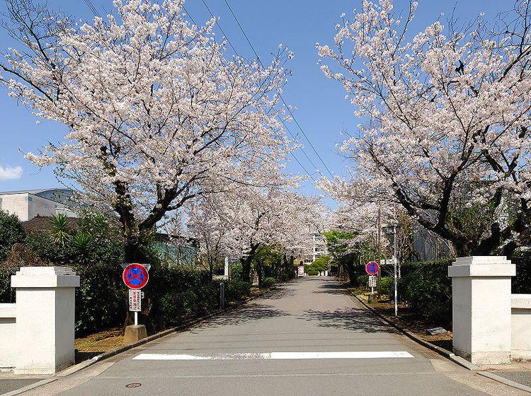 熊本高等学校画像