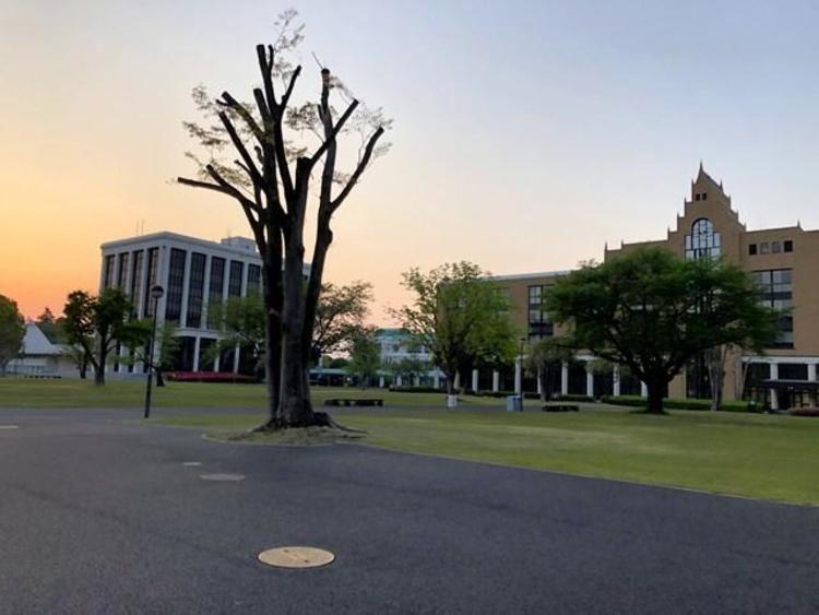 駿河台大学画像