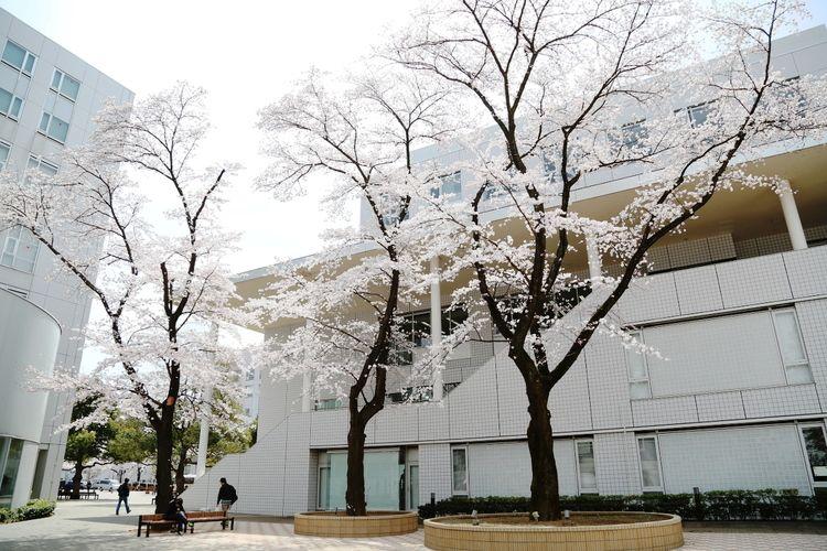 東京国際大学画像