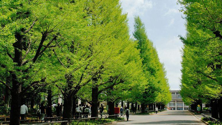 慶應義塾大学画像