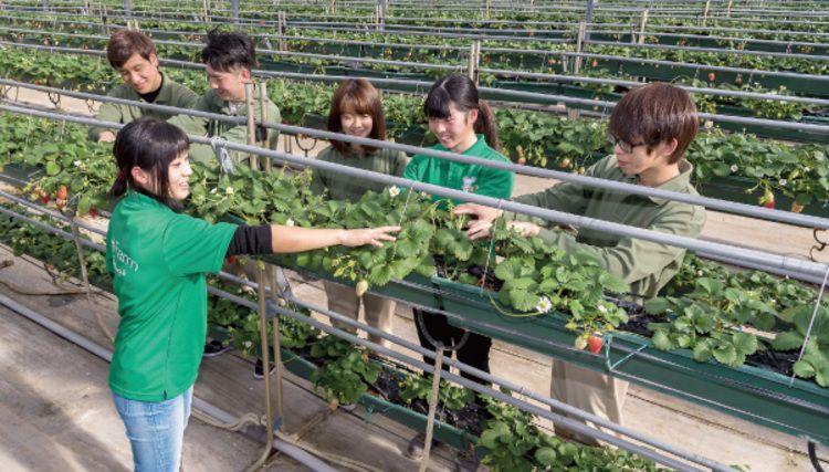 中央農業大学校画像