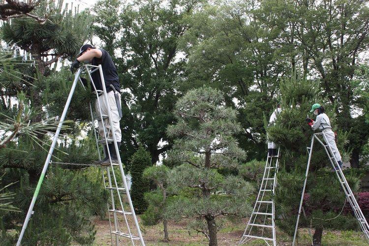 日曜オープン見学会<植木造園専攻を見学希望の方>