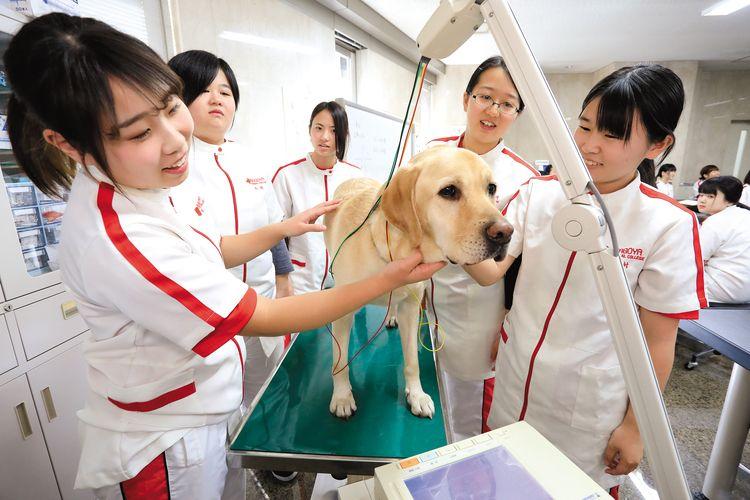 専門学校日本動物21画像