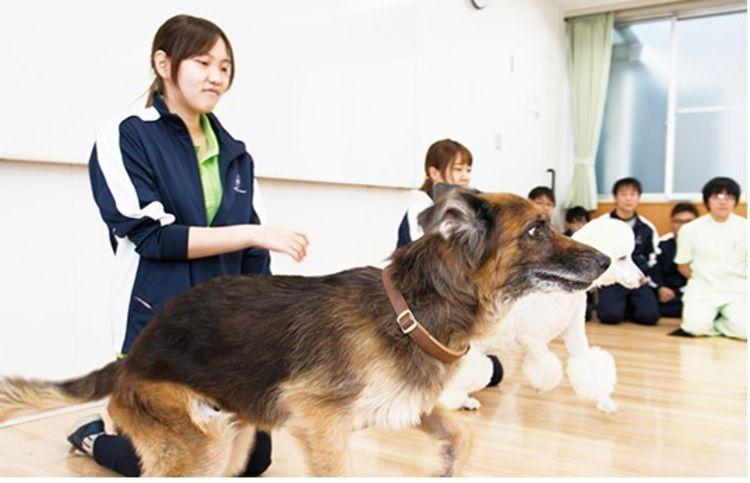 中央動物専門学校画像