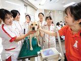 名古屋動物専門学校