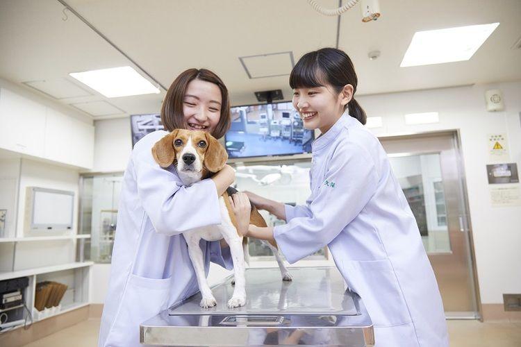 大阪ペピイ動物看護専門学校画像