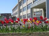 鴻城小学校外観画像