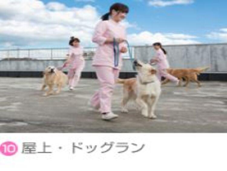 専門学校東北動物看護学院画像